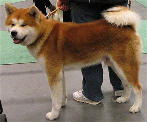 What are all the other types of dogs that are similar to a