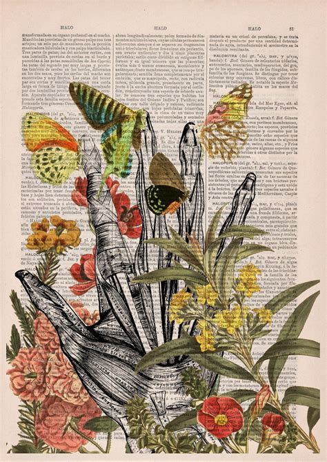 Floral Anatomy Illustrations On The Pages Of Old Books