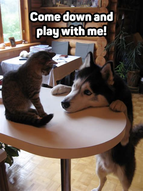 Dog Wants To Play With the Cat | LuvBat