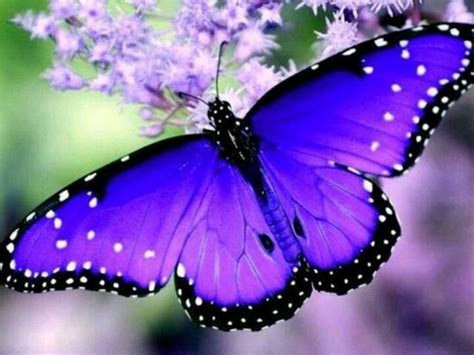 Vibrant colors #getinsync #butterfly