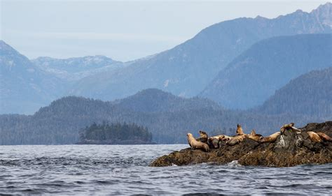 Whales, Bears & Vancouver Island Fly Drive Holiday