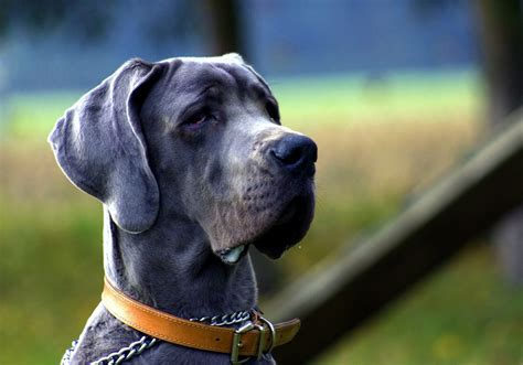 5 Incredibly Strong Male Dog Names for Your Mighty Pup